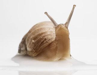 snail-study_202.jpg