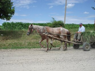 Horse_with_cart.jpg